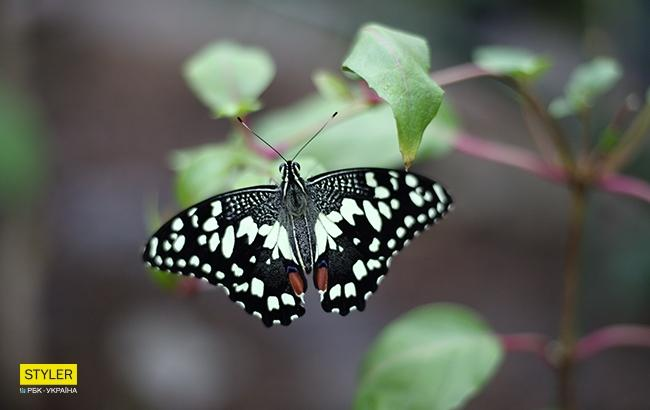 """""""Планета бабочек"""" (фото: РБК-Украина)"""