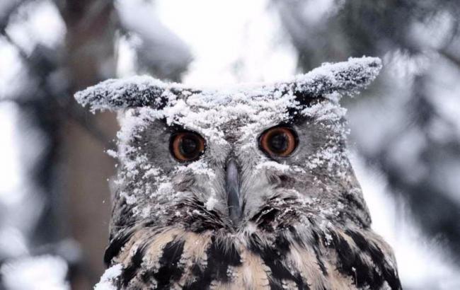 Фото: в Украине ожидается снег