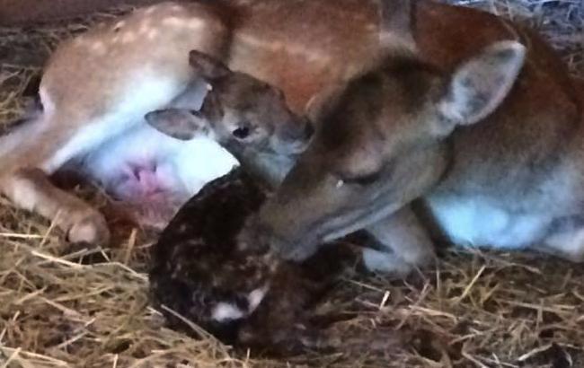 Фото: новорожденный находится под защитой мамы и работников зоопарка (Фото: facebook.com/serhii.hryhoriev.1)