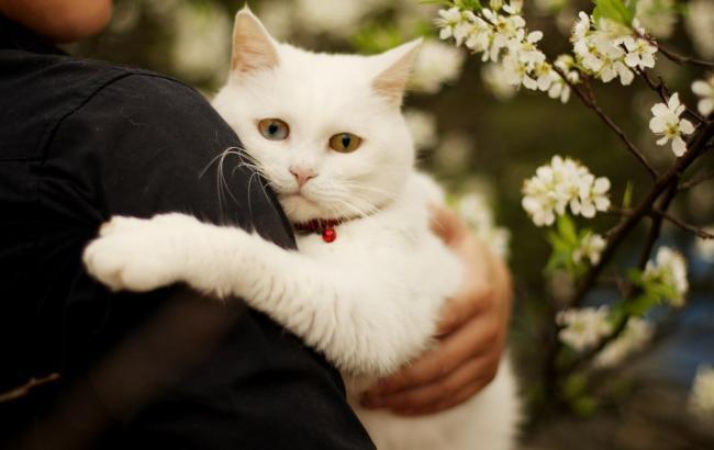 Фото: Кіт