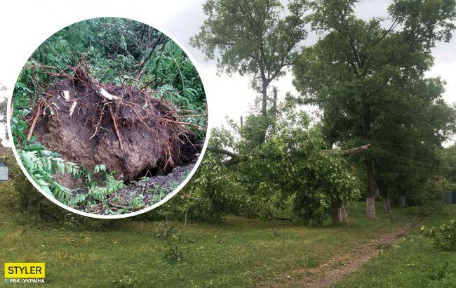 Деревья вырывало с корнями: по Западной Украине прошел ураган