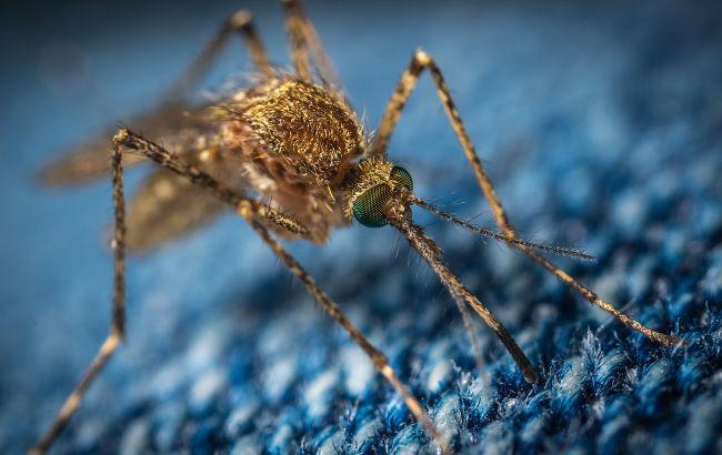 В Харькове зарегистрирован завозной случай малярии