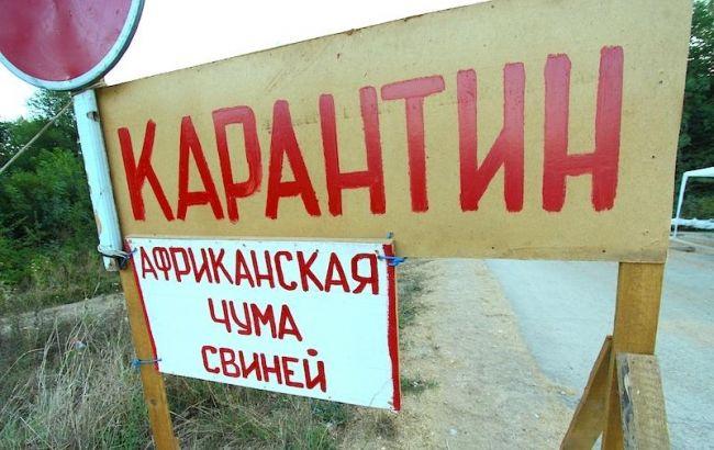 В Киевской области от африканской чумы погибли почти 1 тыс. свиней, - МВД