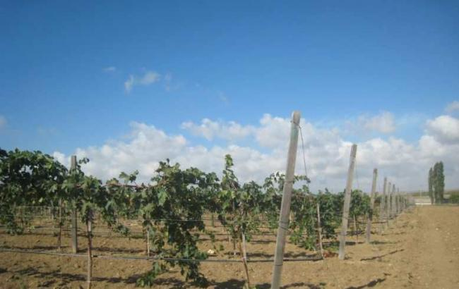 Фото: Половина урожая погибла (apkua.com)