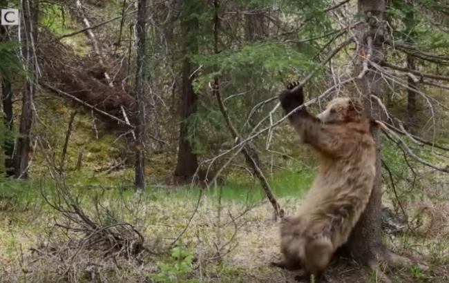 Фото: Ведмідь (nat-geo.ru)