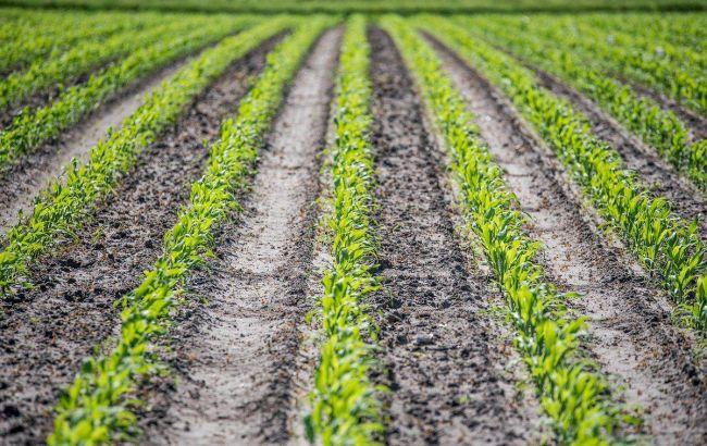 Українці назвали умови запровадження ринку землі