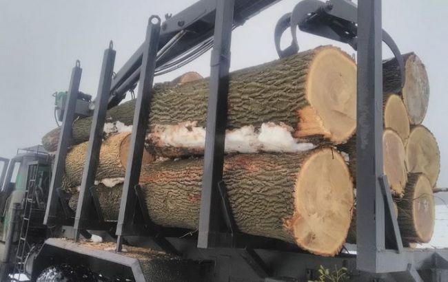 СБУ блокувала розкрадання червонокнижної деревини на 2 млн гривень