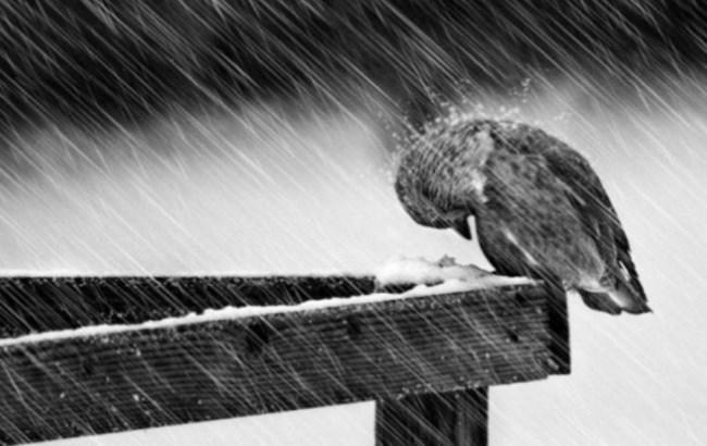 Фото: Мокрый снег (kyiv.depo.ua)