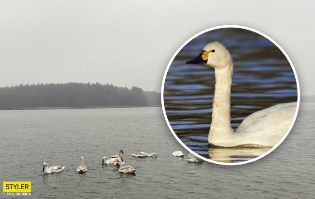 Прилетіли з тундри: під Одесою виявили рідкісних птахів (відео)