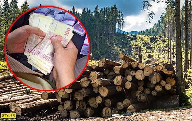 Заробляють мільйони: як українці збагачуються на вирубці лісу