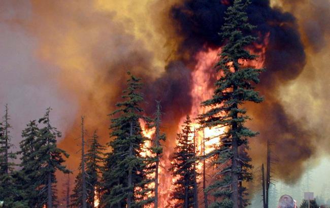 В Забайкалье горит более 100 тыс. га леса