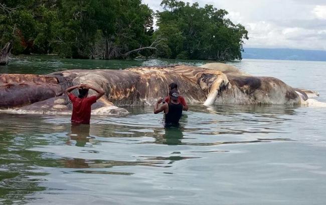 Розкрита таємниця гігантського чудовиська, знайденого на пляжі Індонезії
