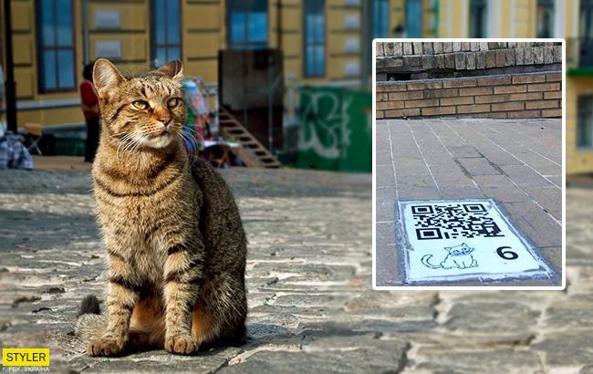 """""""Розумний"""" маршрут: у Києві з'явилися екскурсії з котиками"""