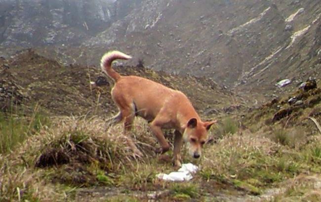 Фото: Стародавня собака