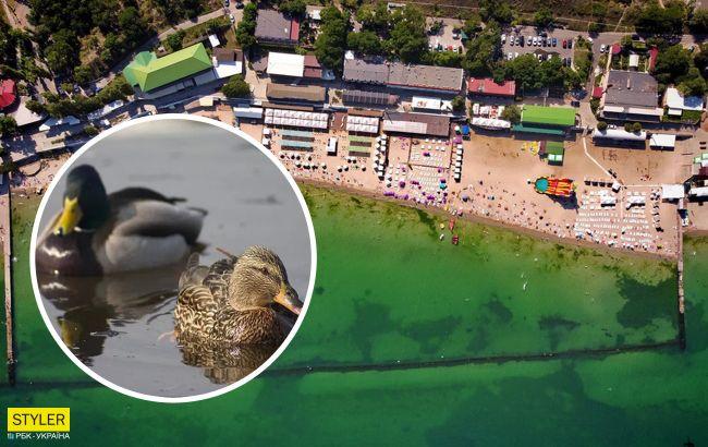 Вонь жуткая: на курорте под Одессой обнаружили десятки дохлых уток