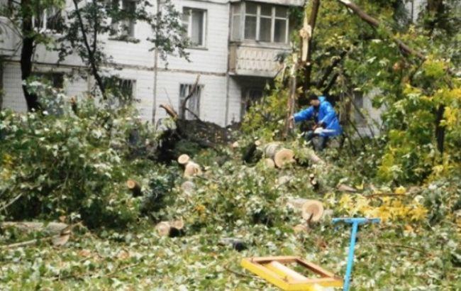 Фото: коммунальщики вывозят обрушившиеся деревья