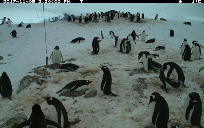 Украинские дети помогут ученым считать пингвинов Антарктики