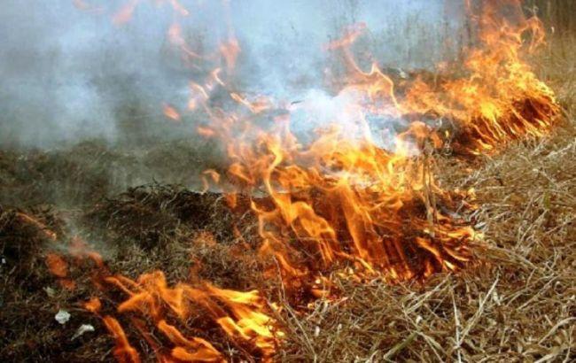 Фото: пожежа в екосистемі