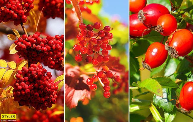 Принесут много пользы: ученые назвали осенние ягоды, которые помогут укрепить здоровье
