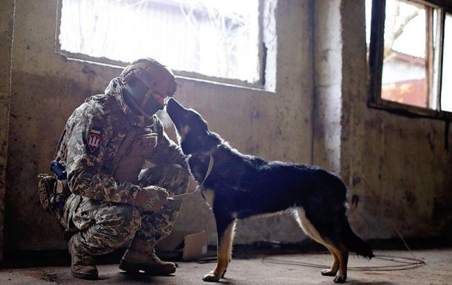 Українські воїни знялися з безпритульними тваринами, щоб допомогти знайти їм родину: милі фото