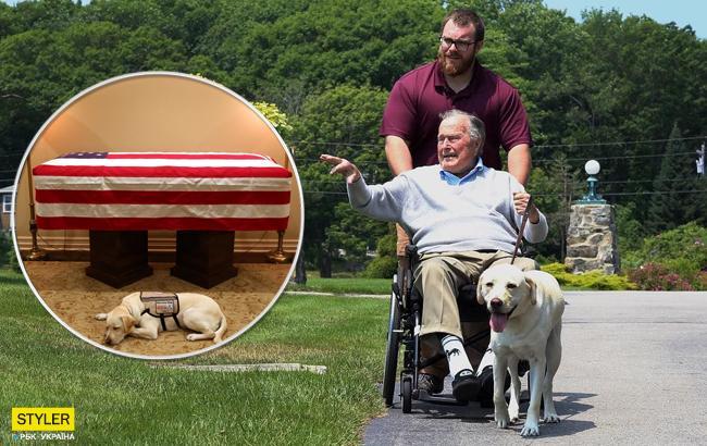 Лабрадор Джорджа Буша-старшего трогательно попрощался со своим хозяином