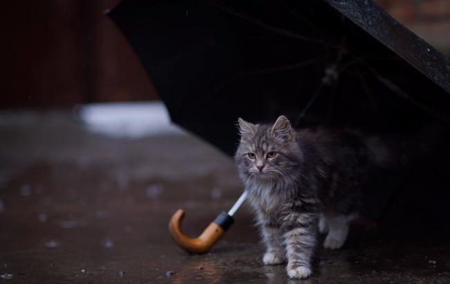 Фото: В Україні прогнозують похолодання