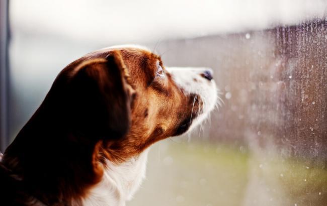 Фото: в Україні очікуються дощі з грозами