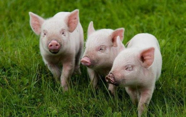 В РФ хотят отдавать санкционные продукты на корм скоту