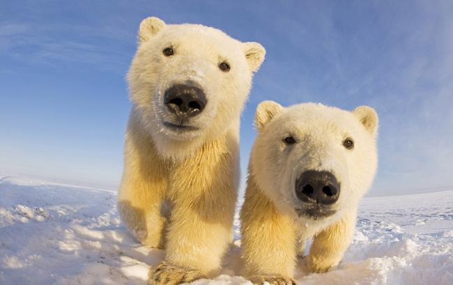 В Германии назвали белых медведей единственными милыми соседями ЕС