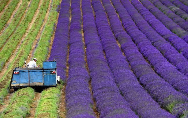 Япония потратит 37 миллионов долларов на замену фермеров роботами