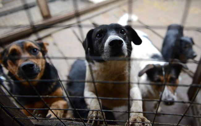 Фото: Собаки в приюте (point.md)