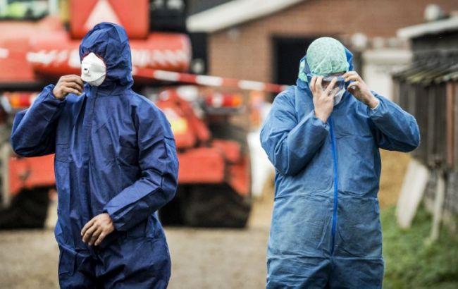 Фото: в Нидерландах зафиксировли птичий грипп
