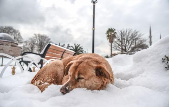 Фото: Зима в Европе (afp.com)