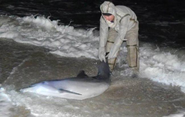 Фото: Постраждалий дельфін (facebook.com/MNS.GOV.UA)