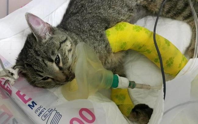 Фото: Вижила в трагедії кішка