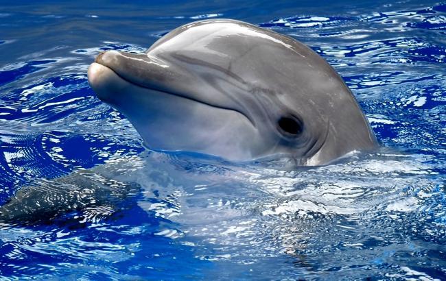 Фото: Дельфін