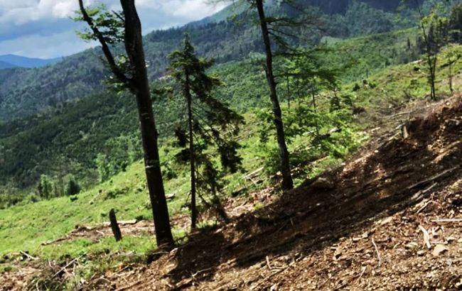 В Закарпатской области будут судить чиновников за незаконную вырубку леса