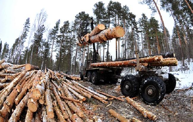 Фото: незаконна вирубка лісу в Бучі