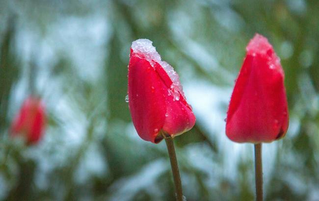 Весна (фото: Гиманов Александр / УНИАН)