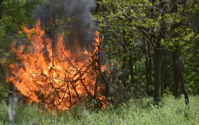ВЧернобыльской зоне полыхает лес