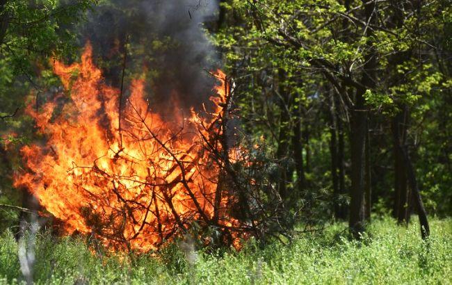 Чрезвычайная пожарная опасность удерживается в Украине