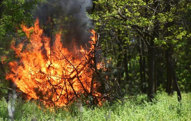 Фото: Пожежа (УНІАН)