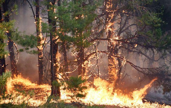 Фото: лесные пожары (УНИАН)