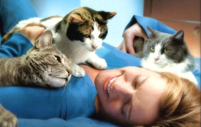 Фото: Кішки