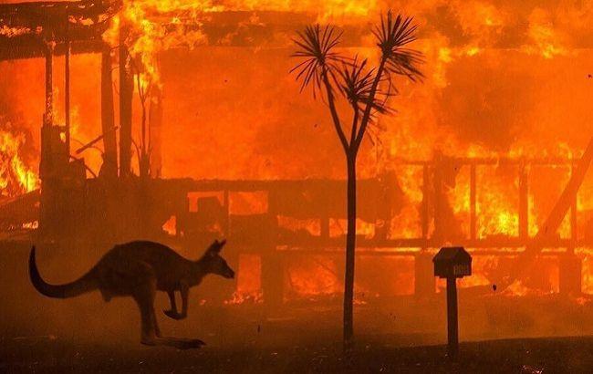 Масштабні пожежі в Австралії: українки допомагають рятувати тварин (фото)