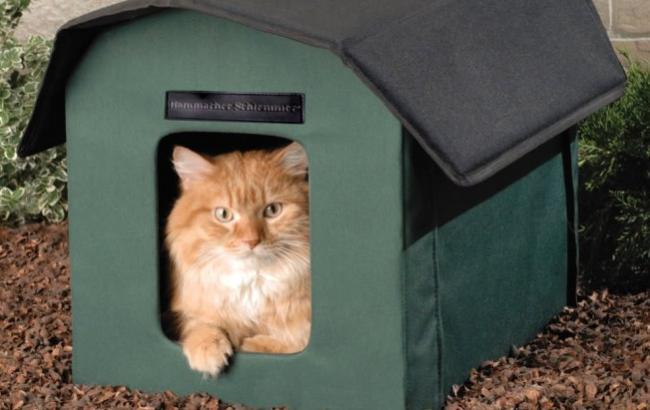 Бездомных котов в Польше обеспечили жильем