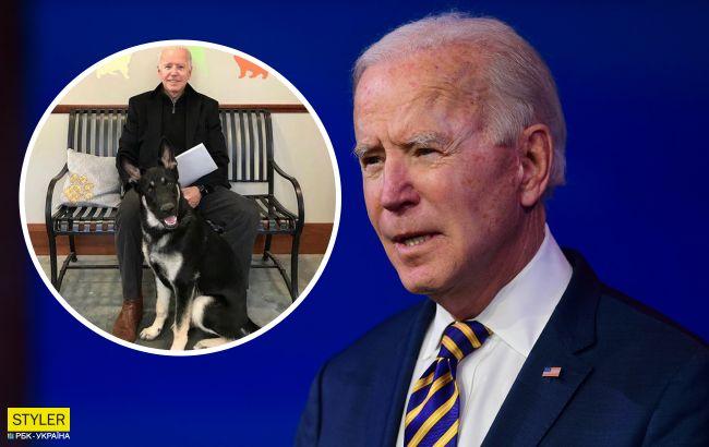 Собак президента Байдена выгнали из Белого дома: названа причина