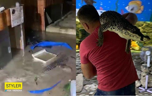 В Ялте полностью затопило крокодиляриум: на свободе оказались 70 рептилий (видео)