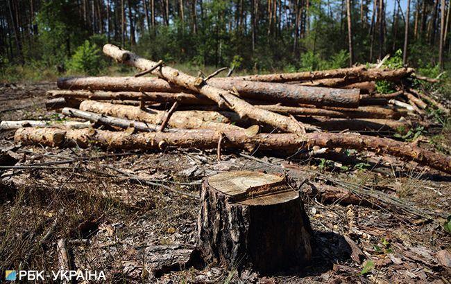 Во Львове массово вырубают лес, пока все на карантине