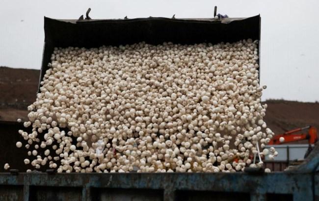 У Росії нагодували чайок тоннами санкционных грибів